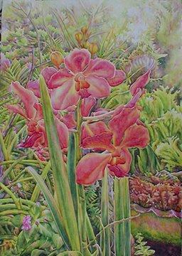 Flamboyant Orchid