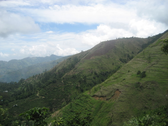 Coffee growing on the mountain hillsides