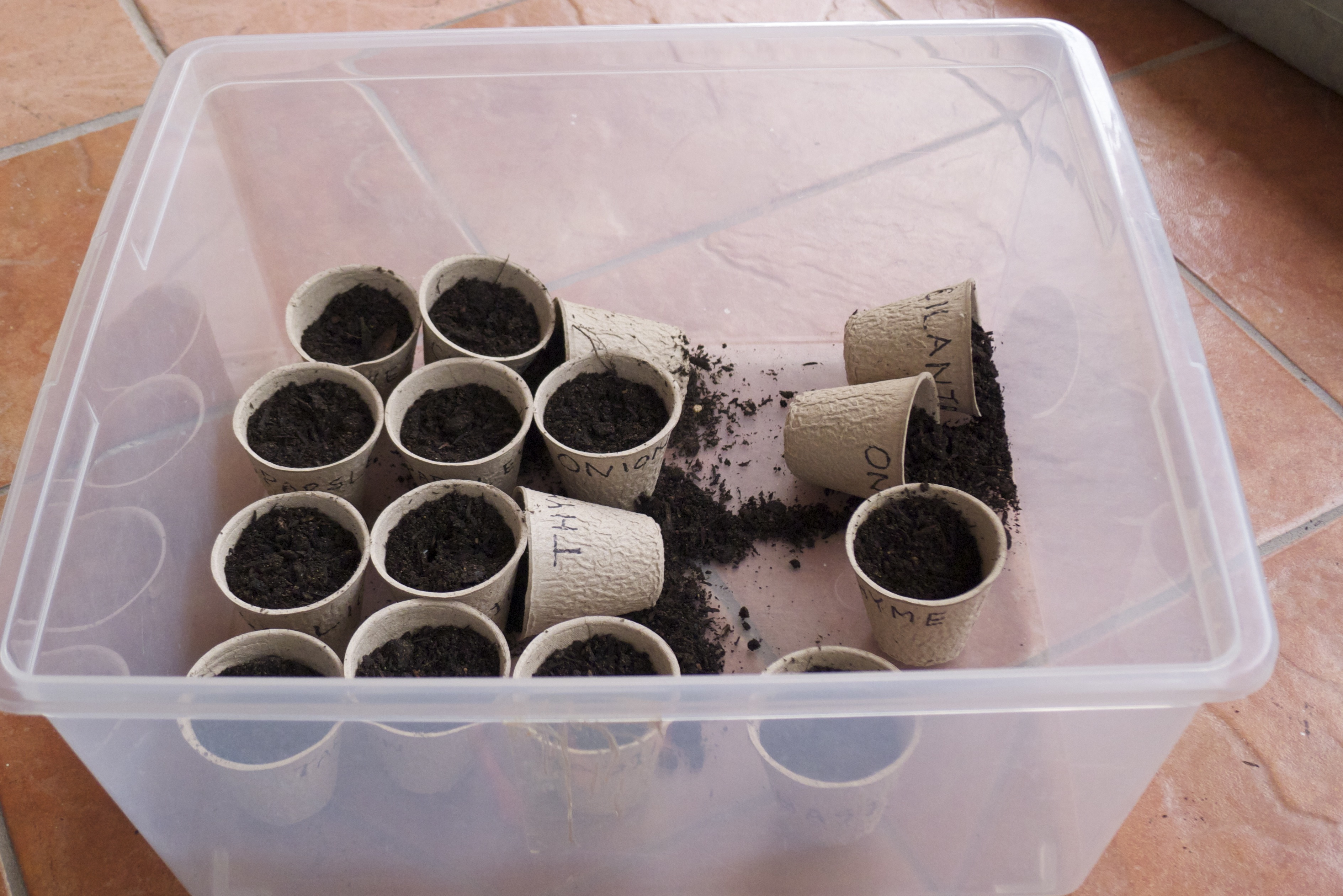 Note to self - these little pots are not very stable...