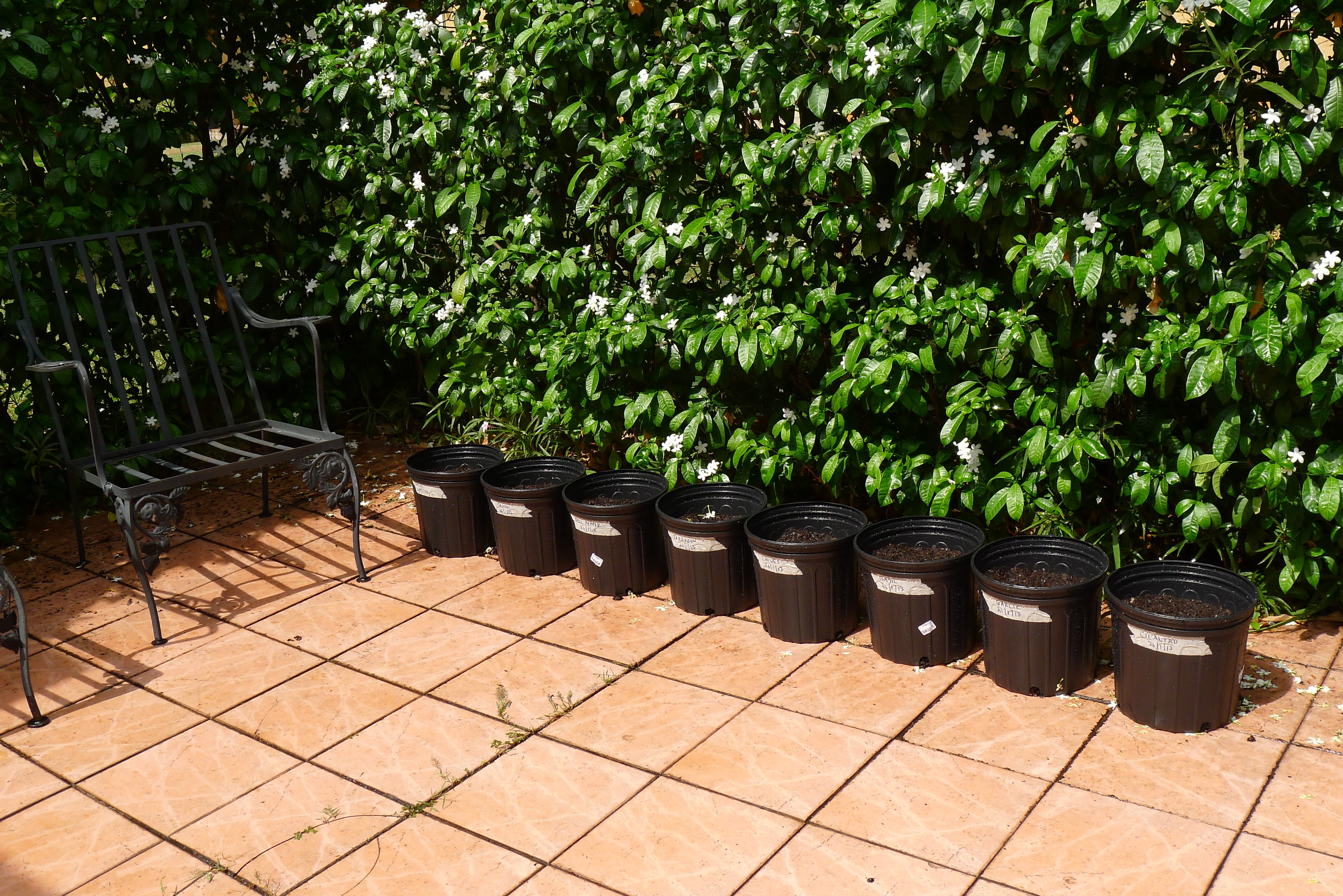 """10"""" pots filled with soil and seeded"""