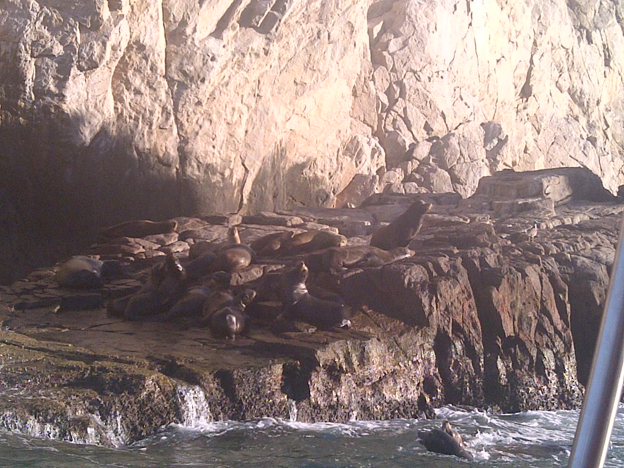 More seals in Cabo