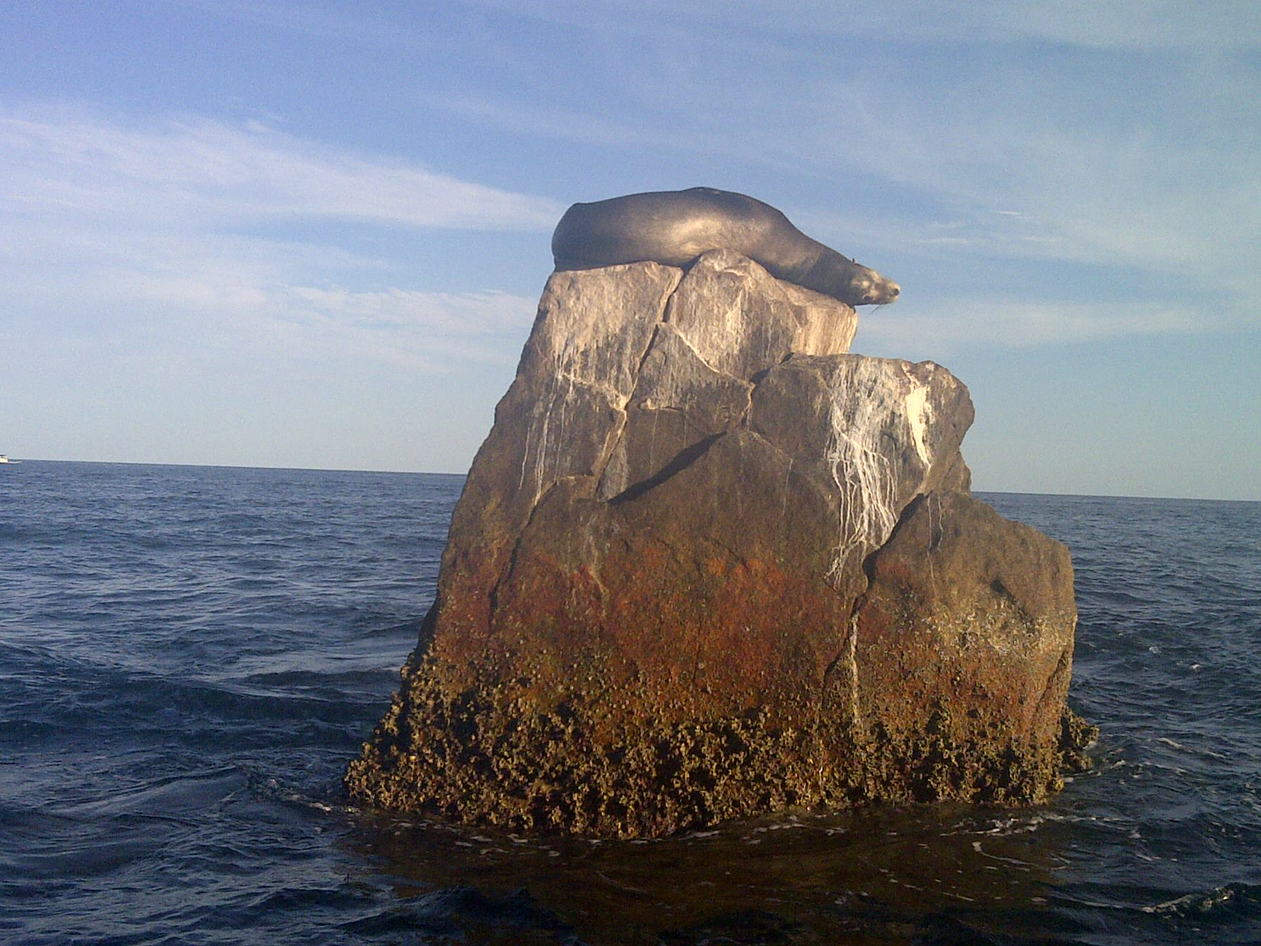 Seal on the Edge