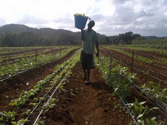 Potosi Farms