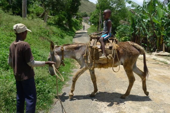 Jamaican boys and their donkey